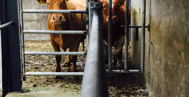 O Cuiv calls for TB testing reprieve for flooded farmers
