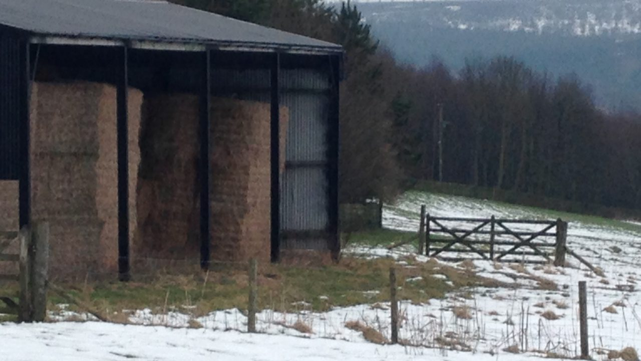 Pics: Snow hit the country last night – there was some great shots on Twitter