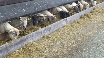 'Sheep farmers need to rethink dosing strategies as resistance is growing'