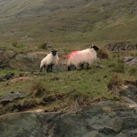 Hundreds of commonage management plans yet to be completed