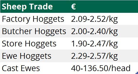 sheep trade 11012015