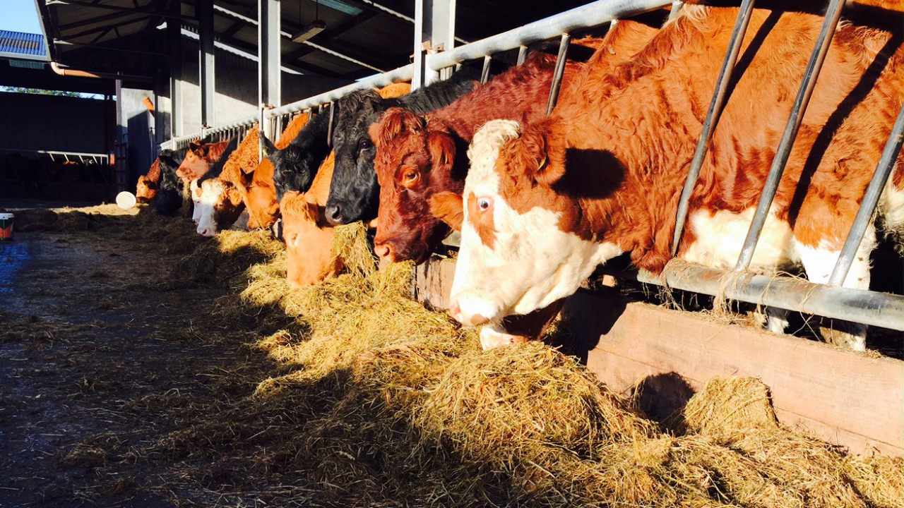 Over 15,000 farmers have received Genomics scheme payments to date