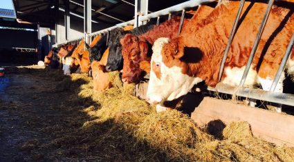 'Suckler calf registrations fall due to income pressure at farm level'