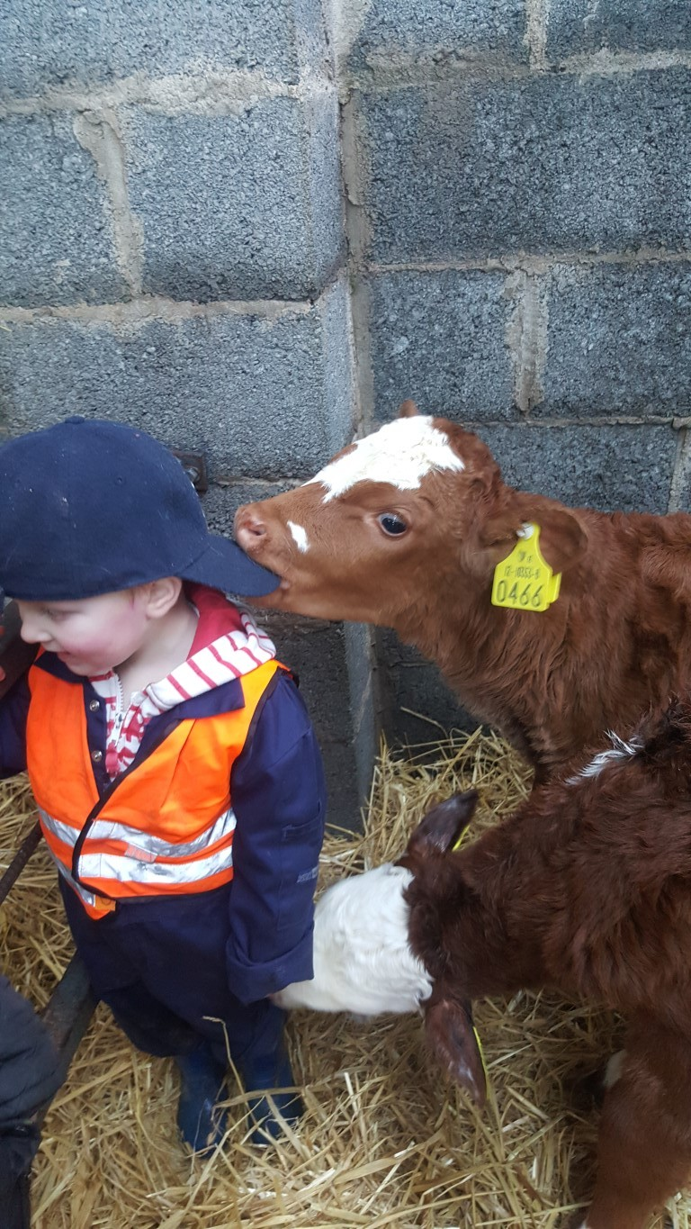 Wee fella was too busy watching other calves skipping around the pen to notice the Lm heifer trying to steal his cap!