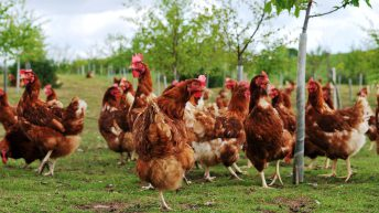 Bird flu prevention zone extended in the North
