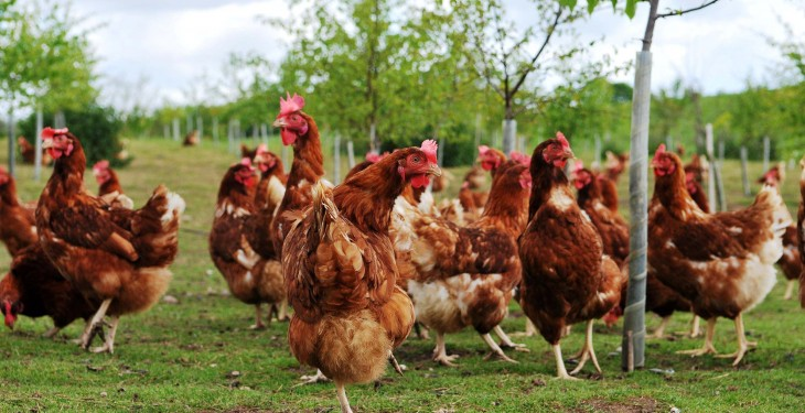 Northern flock owners urged to be vigilant as avian influenza spreads