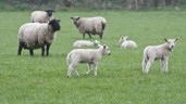 'Strong demand for lamb for the near future'
