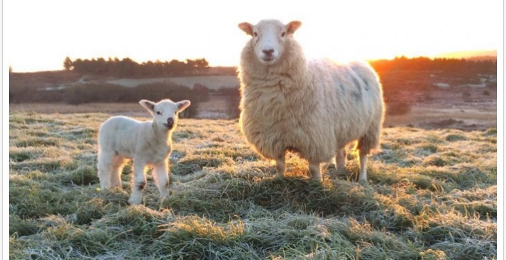 Pics: Lambing 2016 is well underway on farms across the country