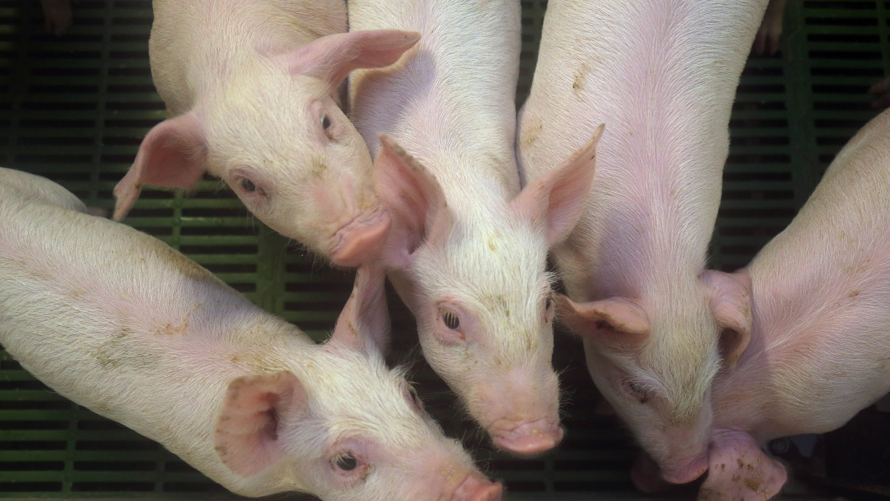 'Strong demand from China driving pork prices for Q3'