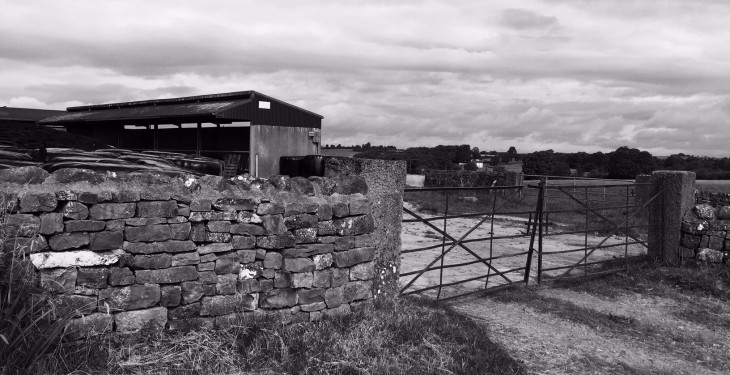 'Cattle shot on Monaghan farm due to security issues'
