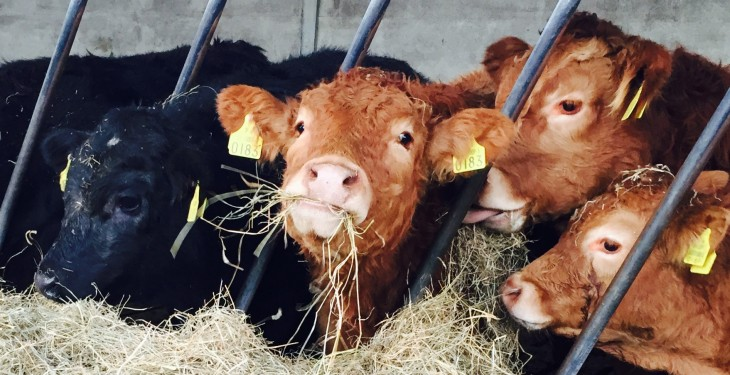 Ag committee members 'greatly troubled by reports of animals going hungry'