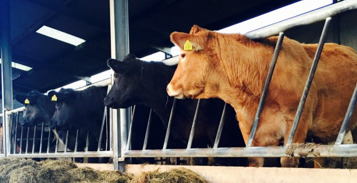 US cattle numbers increase 3% year-on-year