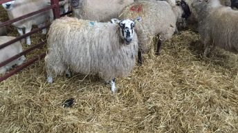 'Increasing the stocking rate of sheep will improve farm profits'