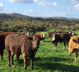 Gross margins on Better Beef Farms jump 53% since joining the programme