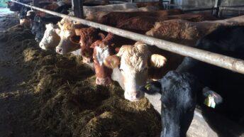 Pics: Take a look at the €100,000 calving facilities at Teagasc Grange
