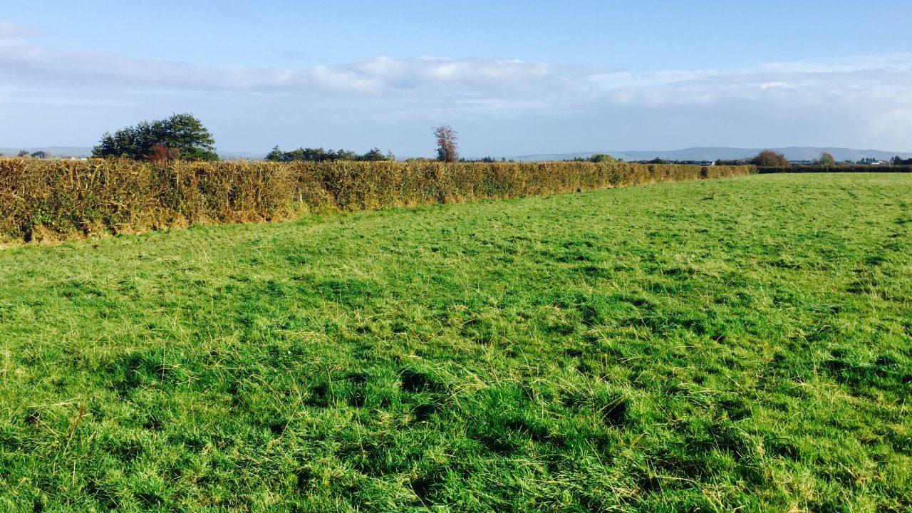 Hedges – neat and tidy are not always ideal