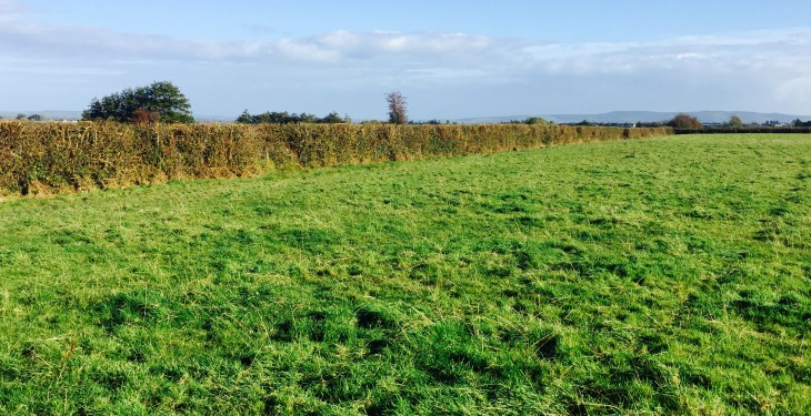 Farmland in the south east is worth more than anywhere else in Ireland