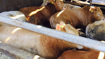 Up to 16c/kg difference in the beef price quoted and paid in Northern Ireland
