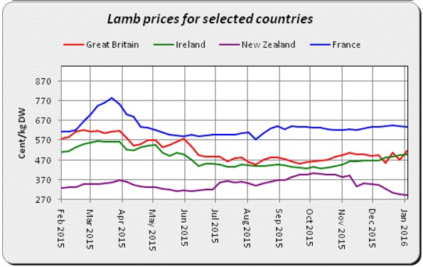 lamb prices