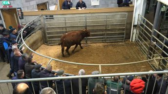 Marts reporting strong trade for cattle around Ireland