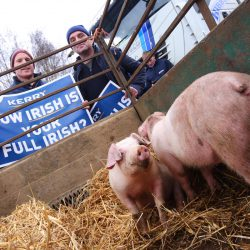 ifa pig protest