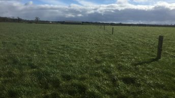 Spring Nitrogen is essential for grass growth on beef farms – Teagasc