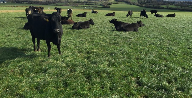 Teagasc farm walks show farmers that spring grass is the best and cheapest feed