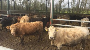 Beef price ball remains firmly in factories court
