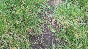 Soil analysis shows much work to be done on improving soil condition
