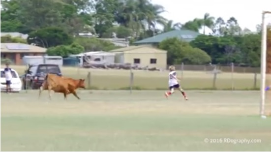 Video: Bull makes it way onto soccer pitch and charges player