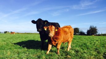 Genomics scheme leads to a move towards easy calving genetics
