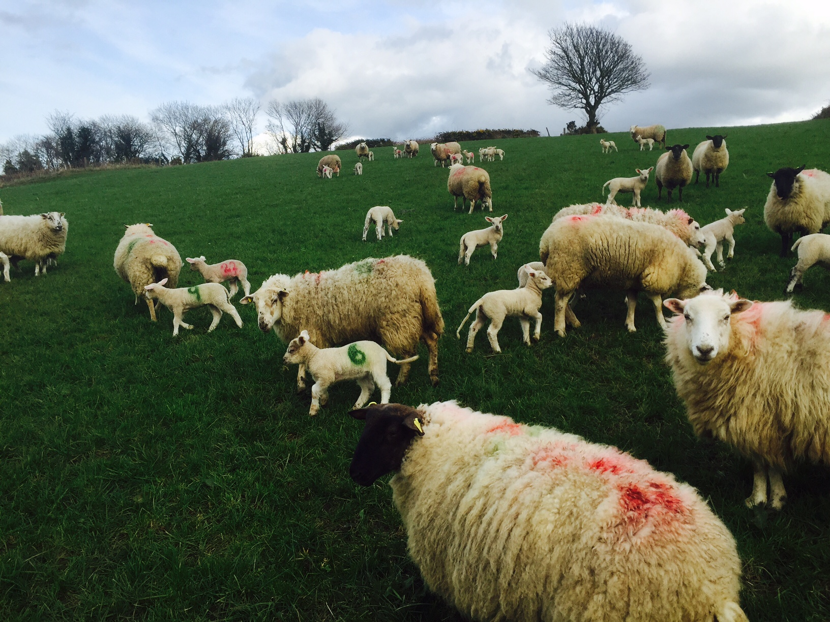5 steps to improve lambing success on your farm - Agriland