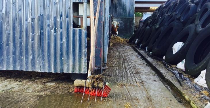 Tipperary farmer injured in bull attack