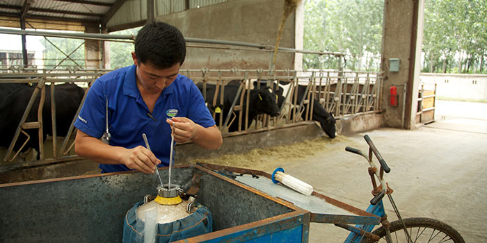 How Fonterra plans to dominate the Chinese dairy market with 15,000 cows