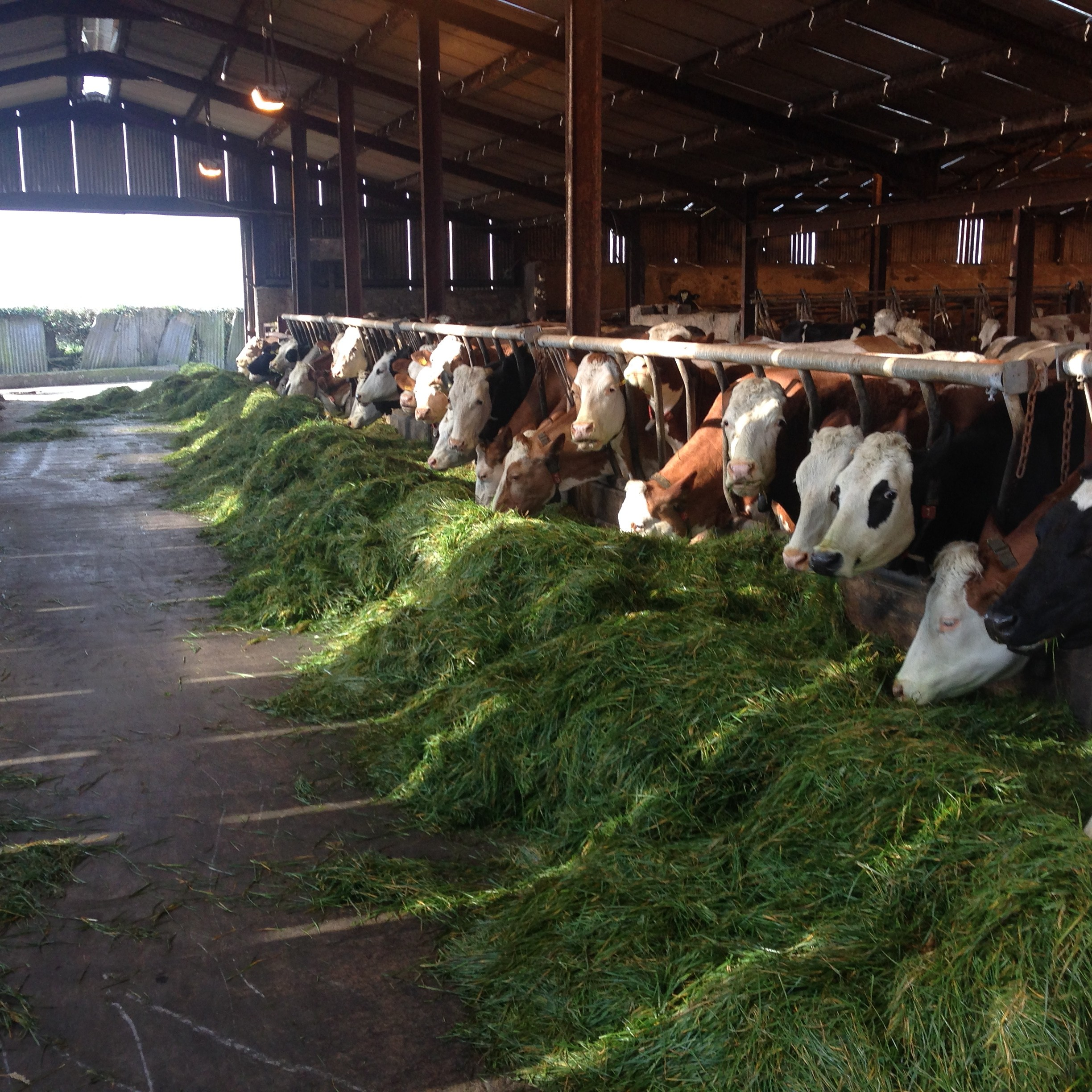 Farming Uk Meat Processing News: Bring A Bit Of German Efficiency To Your Dairy Herd