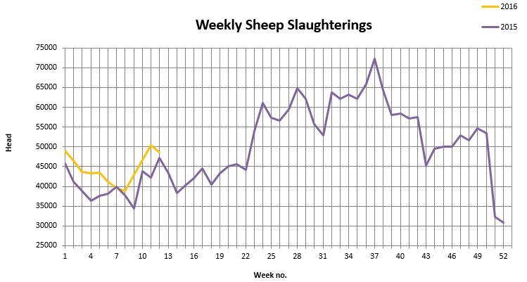 weekly sheep kill slaughterings 3032016