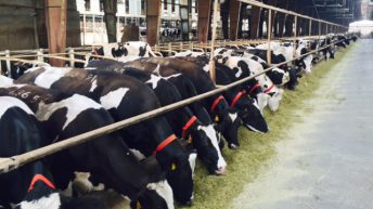 Visit to a dairy farm essay