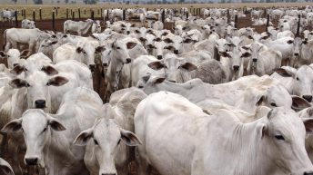 Mercosur trade deal to be tabled next week could devastate Irish beef prices