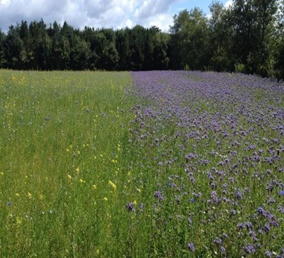 Deadline for sowing of wild bird cover for GLAS extended to mid-June