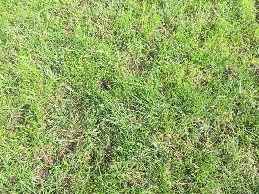 Grazed paddock showing signs of recovery on Shane O'Loughlin's farm in Monasterevin.