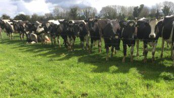The Dairy Forum is failing farmers – ICMSA President