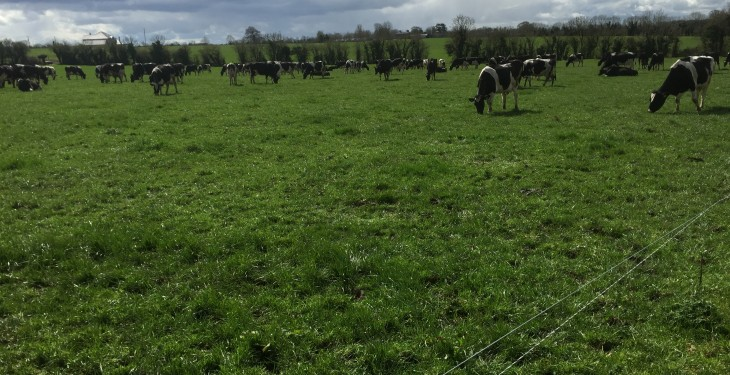 How one farmer plans to increase dairy cows numbers by 33% in 5 years with no extra land
