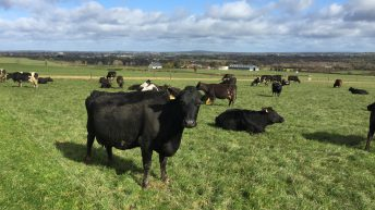 Grazing conditions improve and grass growth jumps – Teagasc