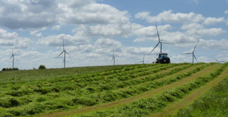 'Livestock perfectly happy and safe around wind turbines' – IWEA