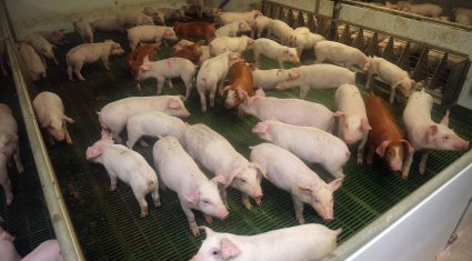 'NI's approval to export pork to China could be worth in excess of £10 million'