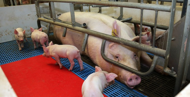 Community continues fight against proposed major pig farm