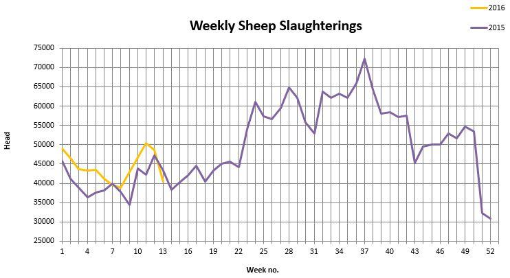 sheep kill