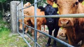 'Preliminary discussions' around mandatory electronic tagging of cattle take place