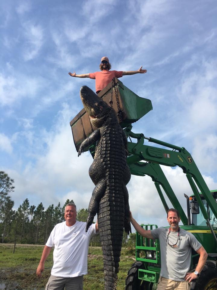 John Deere Gator Prices >> Farmer shoots 15ft alligator which he claims ate his cattle - Agriland.ie