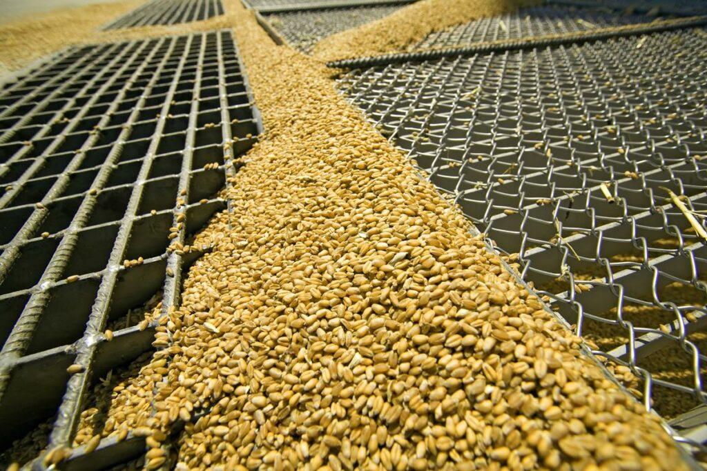 grain prices GMOs